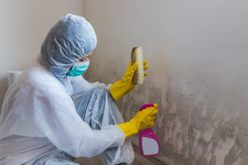 Female worker of cleaning service removes the mold using antimicrobial spray and scrubbing brush.